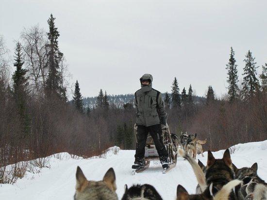 Guesthouse Husky: Crazy dogsled guide riding backwards.
