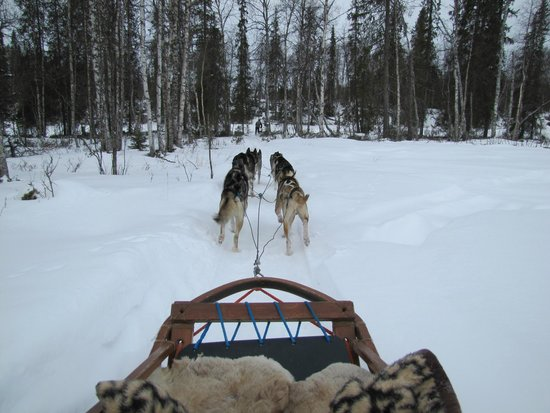 Guesthouse Husky: Dogsledding adventure