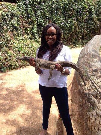 Nairobi Mamba Village: Holding a crocodile