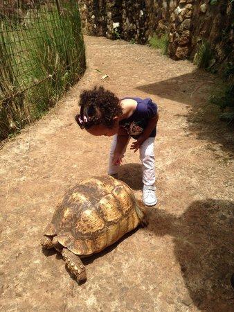 Nairobi Mamba Village: My daughter loved the turtle