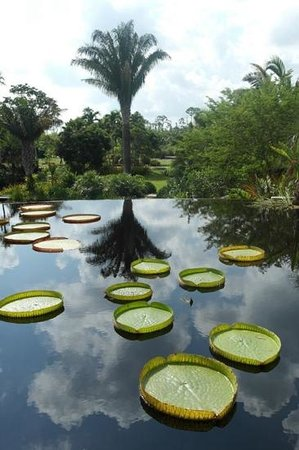 "Naples Botanical Garden : beautiful water ""features"""