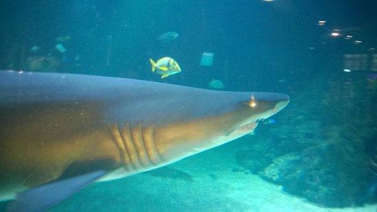 Universeum: Sharks