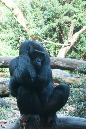 Woodland Park Zoo: Loved this guy ~ sat and posed the the cameras!