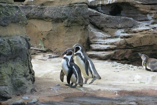 Woodland Park Zoo: Penguins