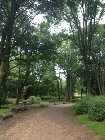 Coombe Abbey Country Park: woodland