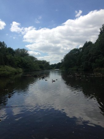 Coombe Abbey Country Park: views