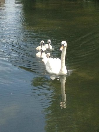 Coombe Abbey Country Park: mum and babies