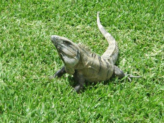Grand Sirenis Riviera Maya Resort & Spa: local wildlife