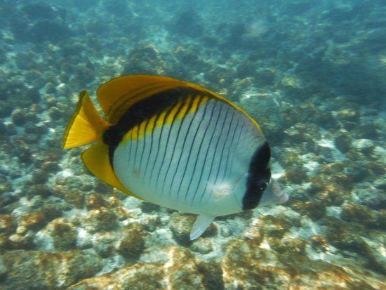 cool fish picture of kahaluu beach keauhou tripadvisor