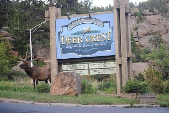 Deer Crest Resort: This guy visited the parking lot area!