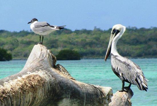 Bayahibe, Dominican Republic: Aves