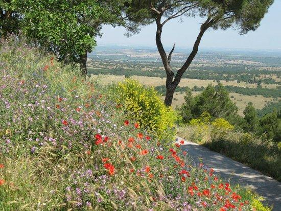 View of Puglia from Castel del Monte