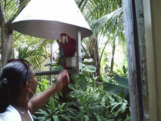 Jungle Island Parrot