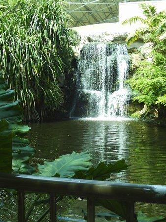Jungle Island: Waterfall