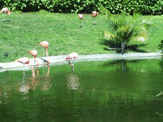Jungle Island: Flamingo Island