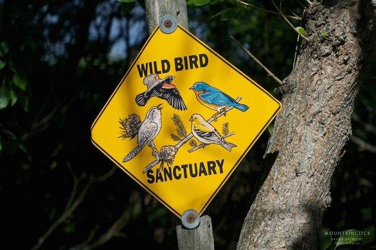 Seaside Farm: bird