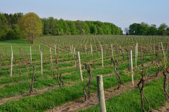Fenn Valley Vineyards : the winery in springtime...