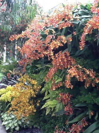 New York Botanical Garden : Exposição de orquídeas magnífica