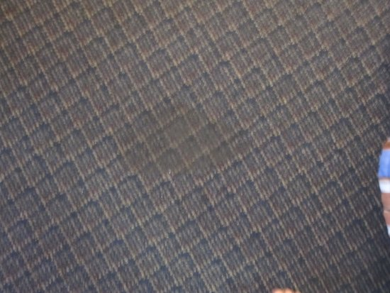 Hotel Blue: stained carpet