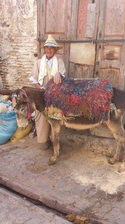 Médina de Fès : Fes Medina Mule Marokko