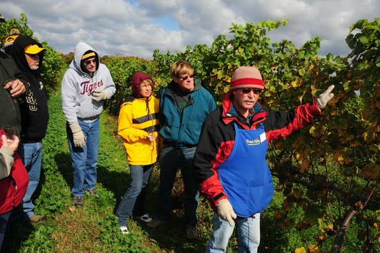 Fenn Valley Vineyards: dismounted from the wine-wagon, for a talk in the vineyards