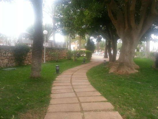 HSM Canarios Park: nice tree