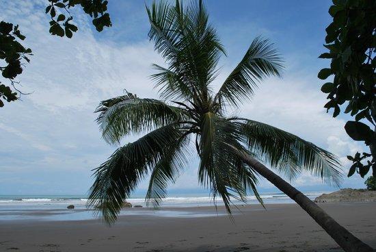 Hotel Diuwak: Playa Dominical