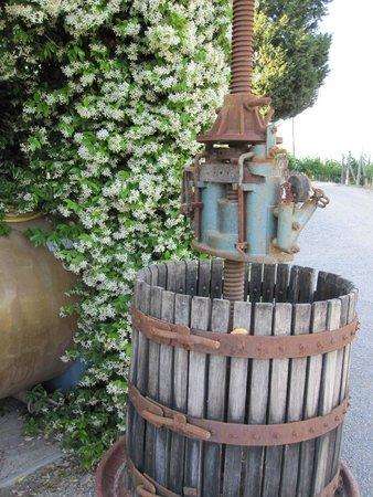 Palazzo Bandino: Jasmine and old wine press