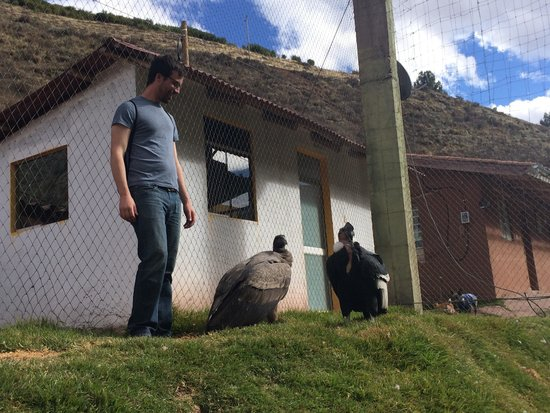 Ccochahuasi Animal Sanctuary: Next to the condors