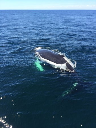 Cape Ann Whale Watch: Humpback whale swam right under our boat!