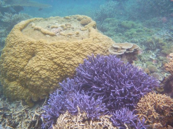 Quicksilver Cruises: 800 yr. old coral we saw with our private snorkel tour with marine biologist