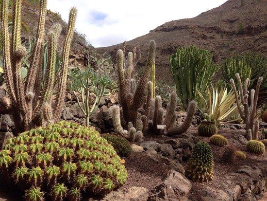 Palmitos Park: Beautiful park!