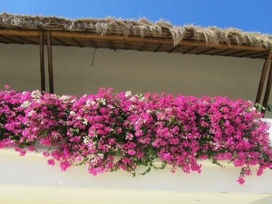Grand Velas Riviera Maya: Beautiful flora around Grand Velas resort