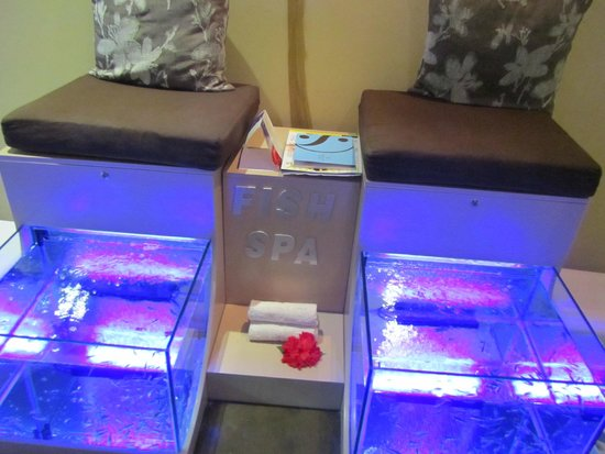 Grand Velas Riviera Maya : Grand Velas spa--fish treatment for feet