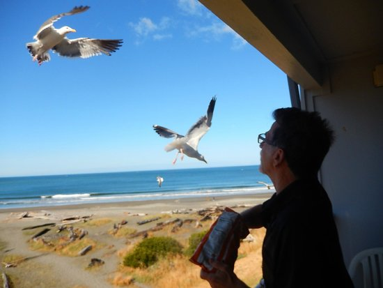 BEST WESTERN PLUS Beachfront Inn: Seagulls flying next to our room balcony - views of the ocean