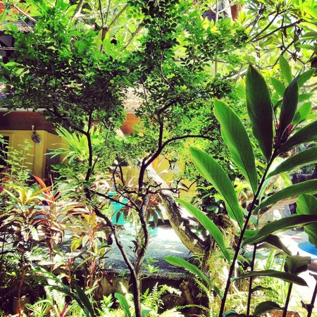 Hotel Lumbung Sari : Tropical garden from our second room