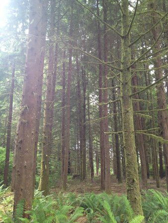 Fort Clatsop National Memorial: Ah, the forest