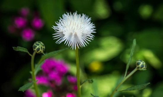 Sherman Library & Gardens : A Beautiful White Flower