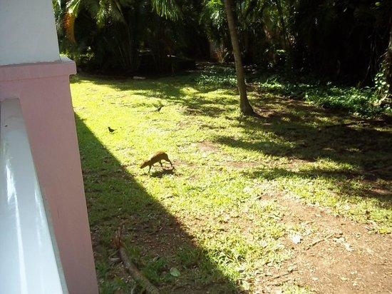 Hotel Riu Playacar: Vista del cuarto al jardin