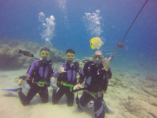 Oahu Diving: Diving with my boys