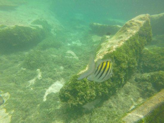 Yal-ku Lagoon: Peces de colores