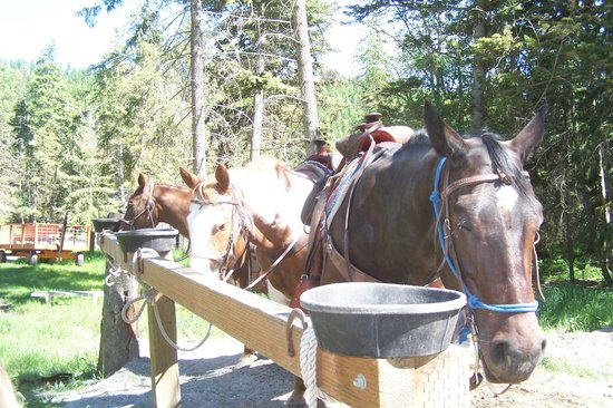 Artemis Acres Paint Horse Ranch: Horses saddled and ready to go!