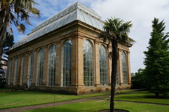Royal Botanic Garden Edinburgh: You know... palm trees in Edinburgh...