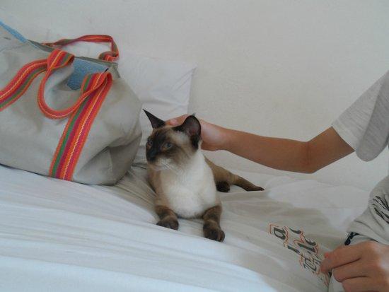 Pousada Tia Helena: Site, um dois gatos da pousada