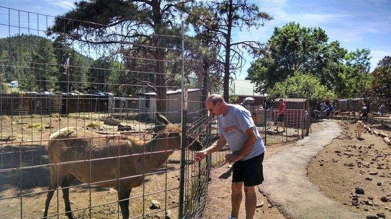 Grand Canyon Deer Farm: Feed the Elk