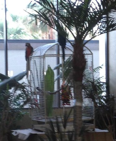 Isla Grand Beach Resort: Birds