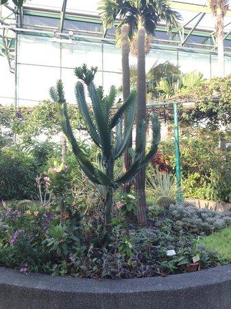 The Secret Garden Utama: cacti and dry climate plants