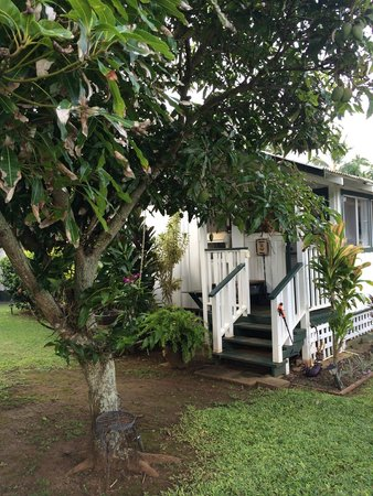 Fern Grotto Inn: Garden Cottage with mango tree