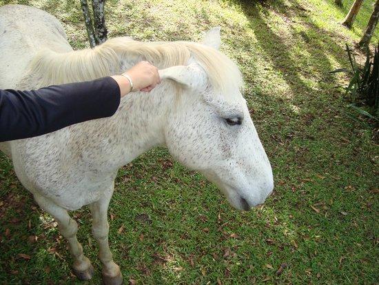 Chales do Canto: cavalo