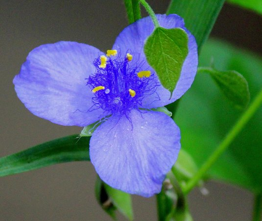 Kennesaw Mountain National Battlefield Park: Wildflower on The Trail